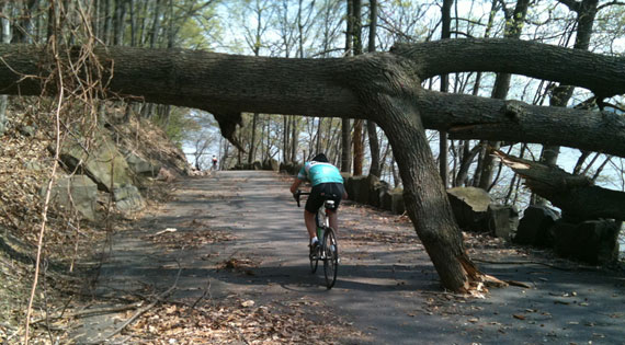 River_Road_Cyclist_Ducking_Downed_Tree.jpg